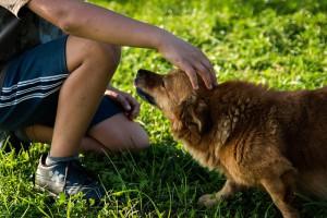 łasący się pies