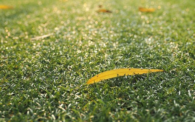 Liść na trawniku