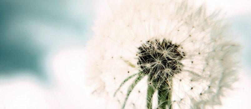 roślin